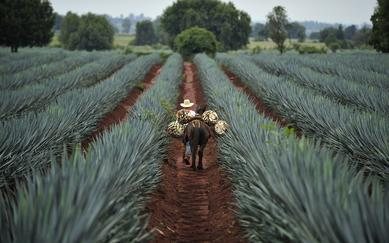 shutterstock_291156707-Tequila_-Jalisco_-Mexico
