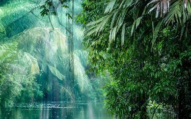 shutterstock_403048339-Tortuguero-National-Park_-Rainforest_-Costa-Rica