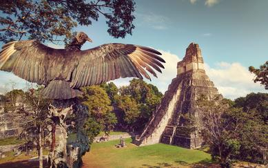 shutterstock_233332351-Neophron-looking-at-the-ancient-ruins-of-the-Mayan-city-of-Tikal