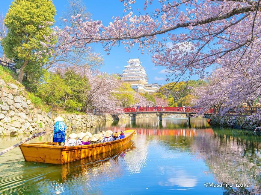 Cherry_Blossom_Himeji_Castle_5_result