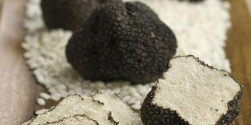 fresh-black-summer-truffles-from-italy-1s-3480