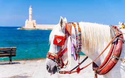 shutterstock_547519057-Closeup-of-a-white-horse-carrying-a-tourist-carriage-in-Chania_-Crete_-Greece