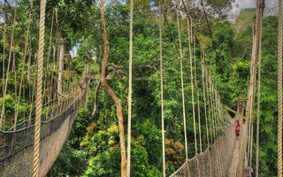 shutterstock_227500849-Canopy-Walkway-in-Kakum-National-Park_-Ghana